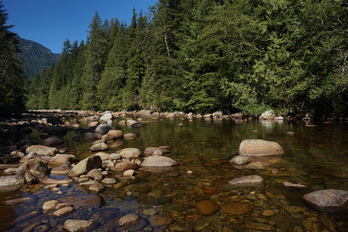 Der Seymour River.