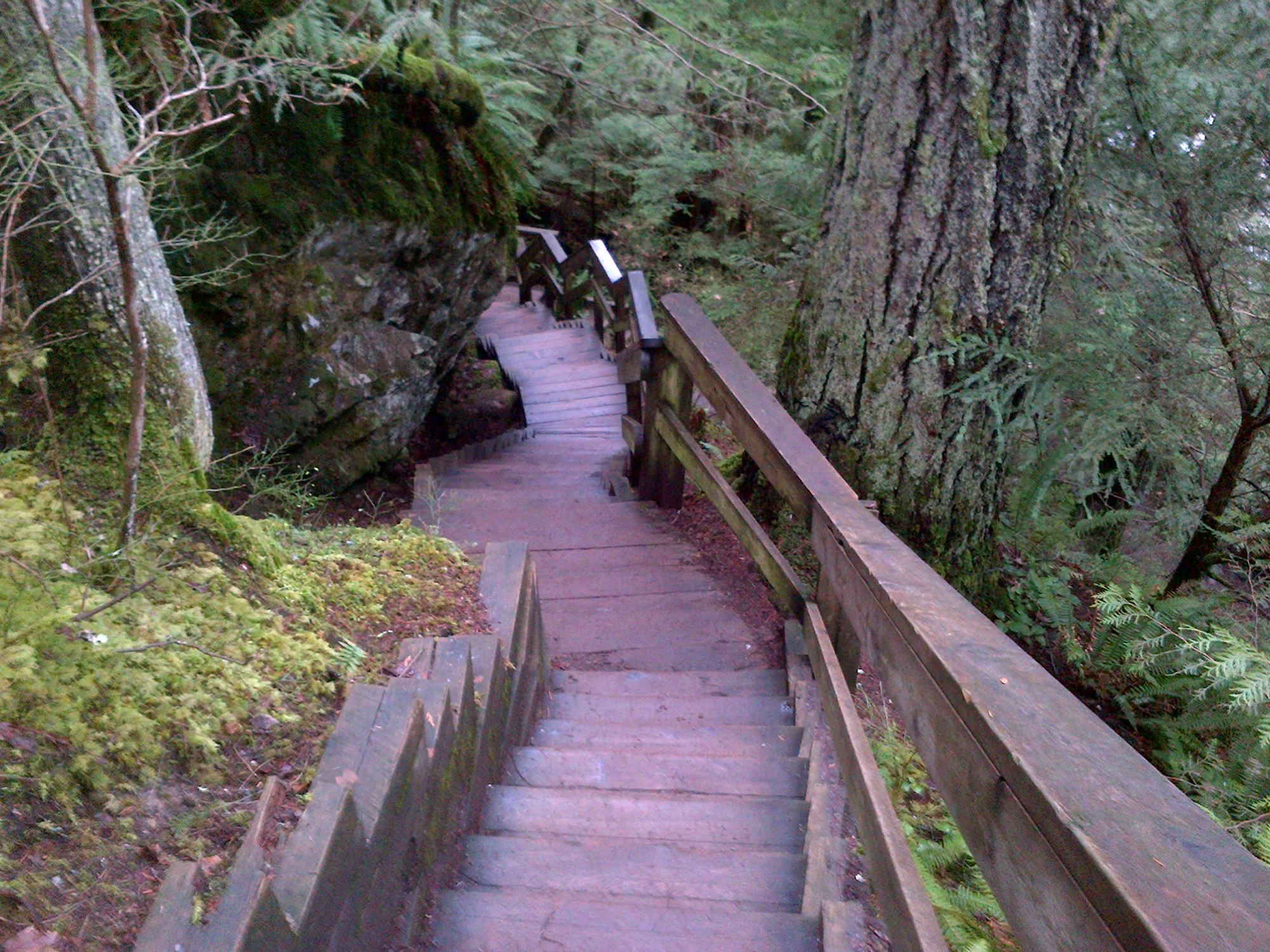 Treppe des Baden-Powell Trail an der Lynn Canyon Suspension Bridge.
