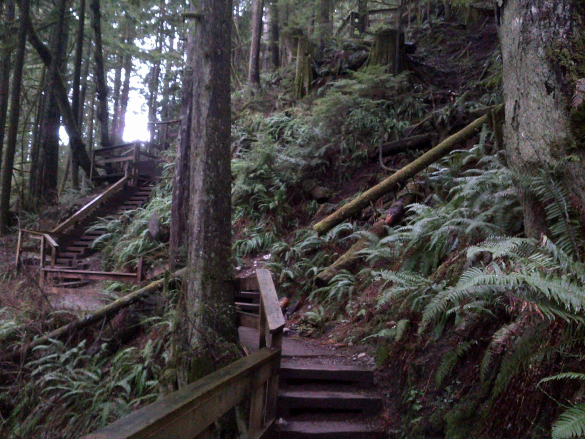 Treppe des Baden-Powell Trail beim Lynn Headwaters Overflow.